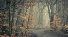 森林小路树木树叶风景