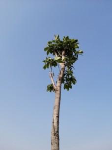 树木树叶树枝树杈