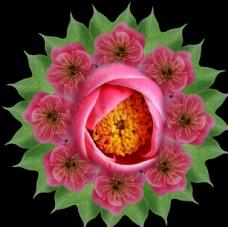 茶花印花背景