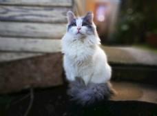 一直凝视远方的美丽猫咪