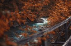 森林 树木 树叶 河流 风景