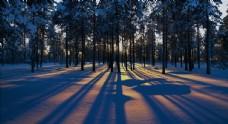 森林 树木 树叶 阳光 风景