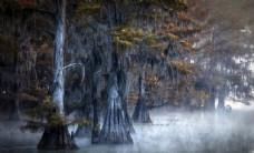 森林 树木 树叶 风景 背景
