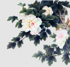 水墨牡丹花素材