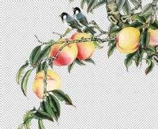 桃子树工笔素材