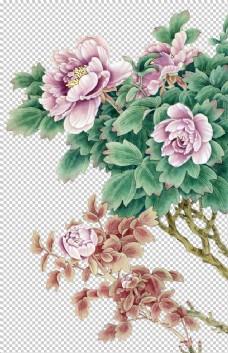 牡丹花工笔画素材