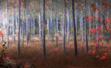 森林草地树木树叶风景